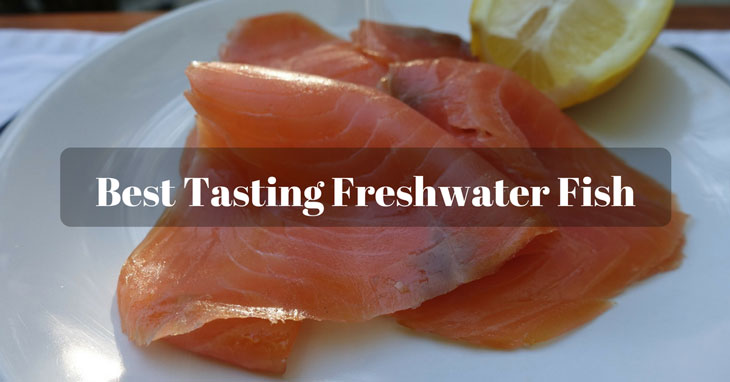 Best Tasting Freshwater Fish Top 9 Fish Species Are Recommened