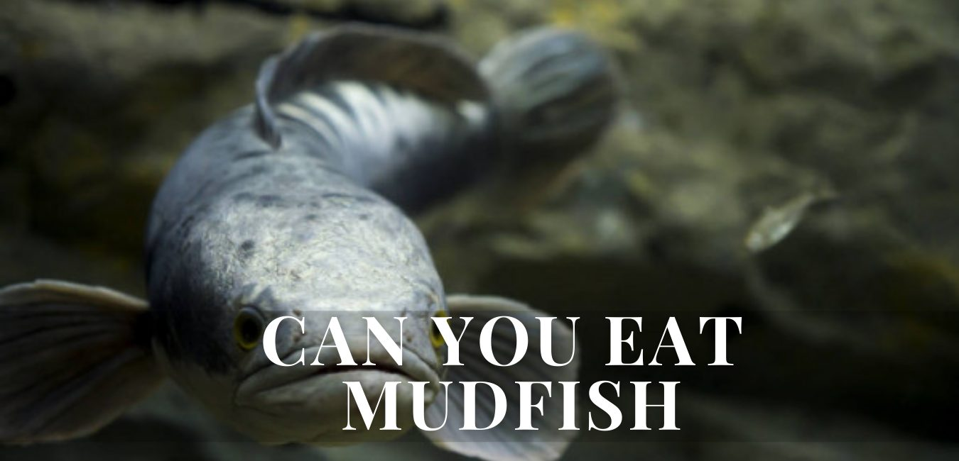Can You Eat Mudfish