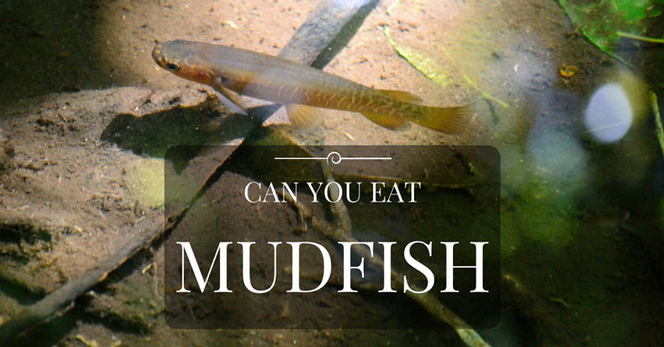 Can You Eat Mudfish 000
