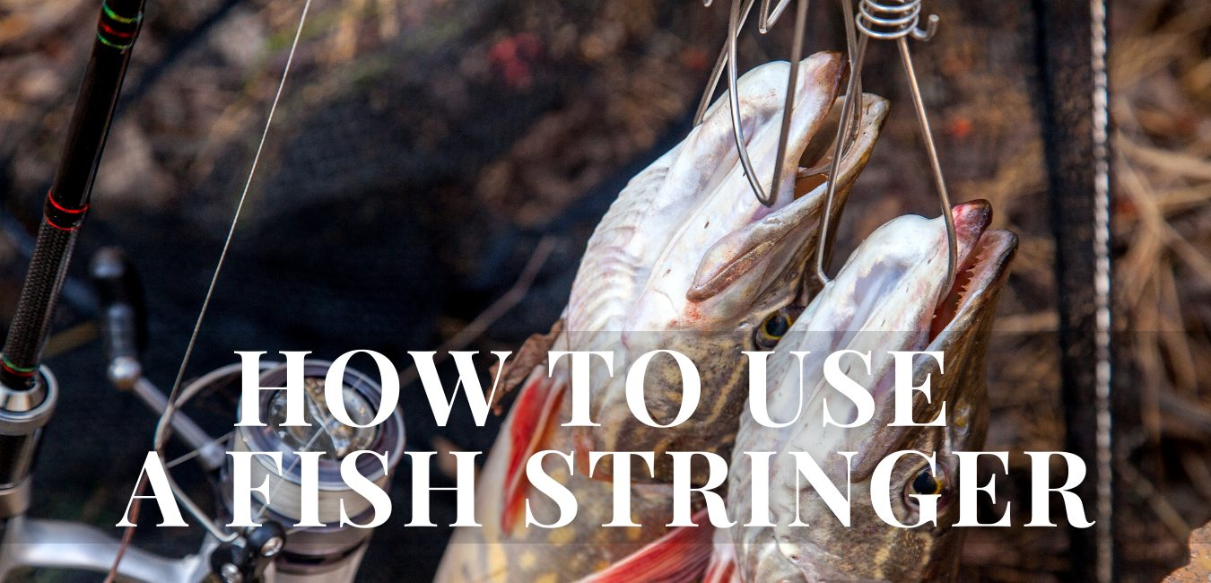 How to use a fish stringer
